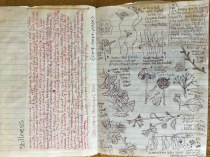 Rough text and sketches I did in Prospect Park. My sketches and journal entries from time spent in the park were the inspiration for my Eco-Mandalas, as well as my book artist book, Prospect Park Illuminated.